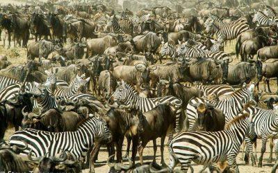 8 EXPERIENCES YOU MUST DO IN THE MASAI MARA WITH ORIGINS SAFARIS