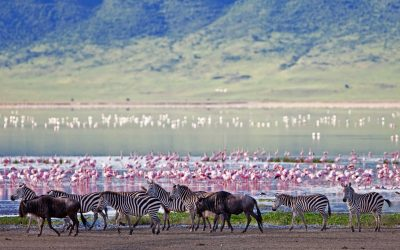 EVERYTHING YOU NEED TO KNOW ON YOUR FIRST SAFARI TO AFRICA WITH ORIGINS SAFARIS