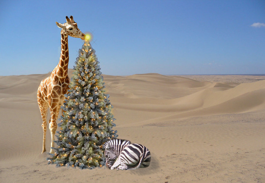 CHRISTMAS & NEW YEAR SAFARIS IN AFRICA