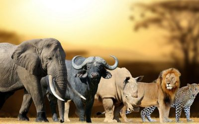 AFRICA'S BIG FIVE: WHO ARE THEY?