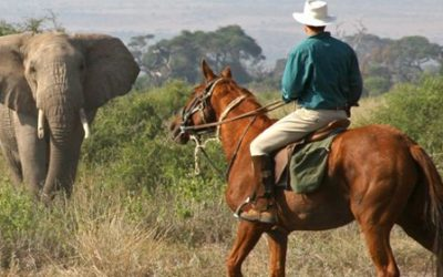 8 EXPERIENCES YOU MUST HAVE IN THE MAASAI MARA WITH ORIGINS SAFARIS