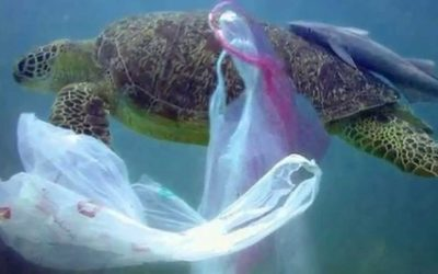 TANZANIA INTRODUCES BAN ON PLASTIC BAGS