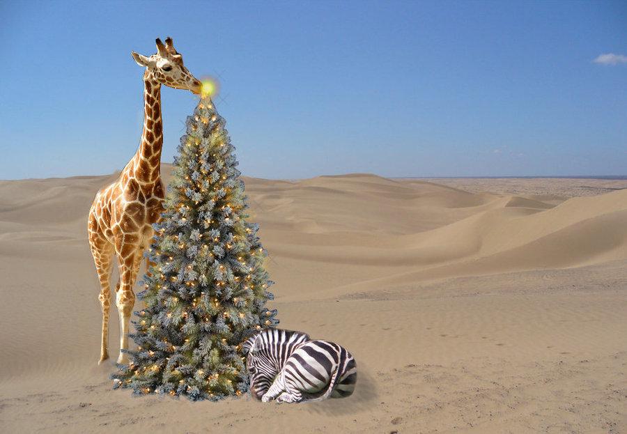 ORIGINS SAFARIS TOP 5 CHRISTMAS GIFT IDEAS