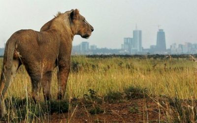 """NAIROBI … NOT JUST A LAYOVER – THE """"GREEN CITY IN THE SUN"""""""