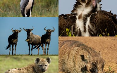YOU HAVE HEARD OF THE BIG FIVE AND THE SMALL FIVE… BUT HAVE YOU HEARD OF AFRICA'S UGLY FIVE?